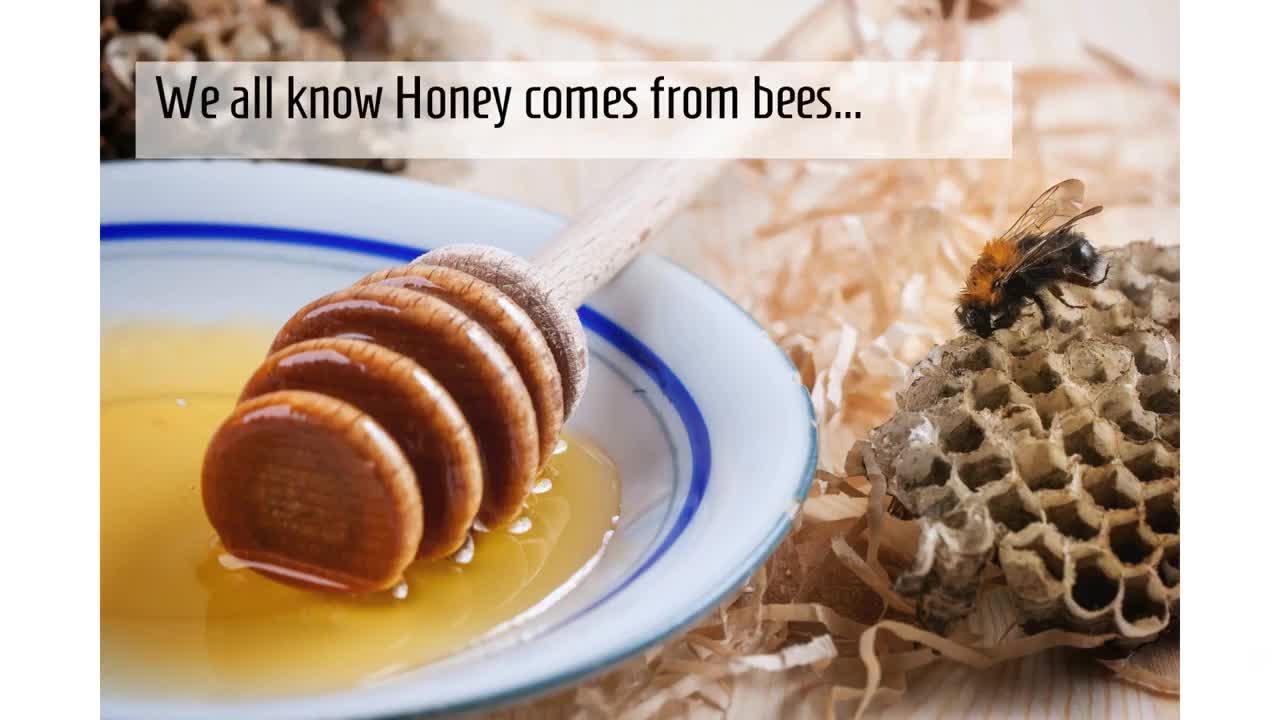 21+ Bee Free Honey Wallpapers